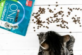Purina ONE DualNature